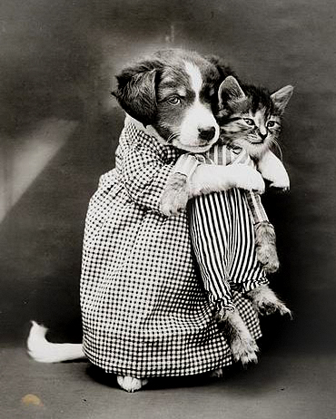 Photo by Harry Whittier of dog holding a kitten